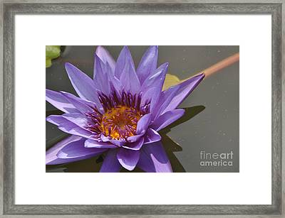 The Color Purple Framed Print