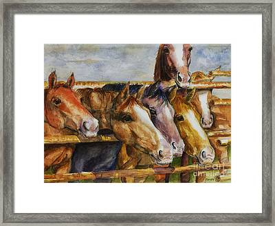 The Colorado Horse Rescue Framed Print