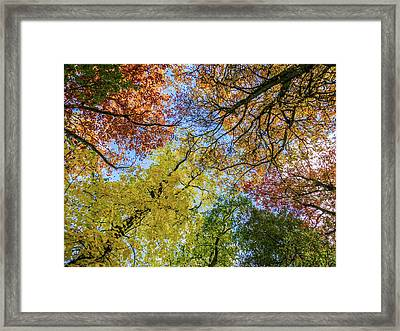 The Colors Of Autumn Framed Print