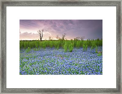 The Colors Of Bluebonnet Field On A Stormy Day - Texas Framed Print by Ellie Teramoto