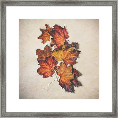 The Colors Of Fall Framed Print by Scott Norris