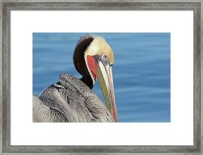 The Colors Of Love Framed Print by Fraida Gutovich