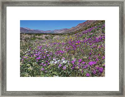 The Colors Of Spring Super Bloom 2017 Framed Print by Peter Tellone