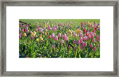 The Colors Of Springtime Framed Print by Tina M Wenger