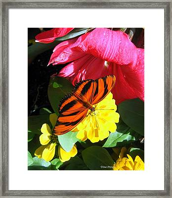 The Colors Of Summer Framed Print by Trina Prenzi