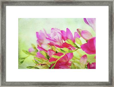 Framed Print featuring the photograph Colour Full Freesia by Connie Handscomb