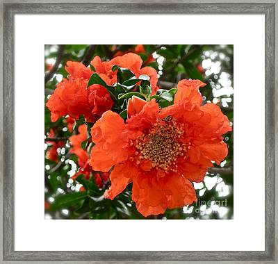 The Colour Orange Framed Print by Gwyn Newcombe