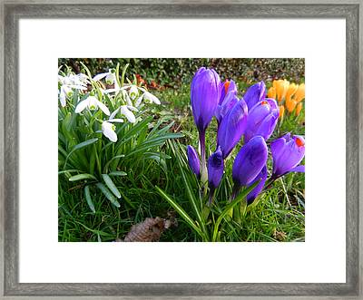 The Colours Of A New Beginning Framed Print