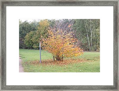The Colours Of Autumn 5 Framed Print by Carol Lynch