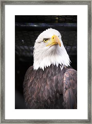 The Commander Framed Print by Julius Reque