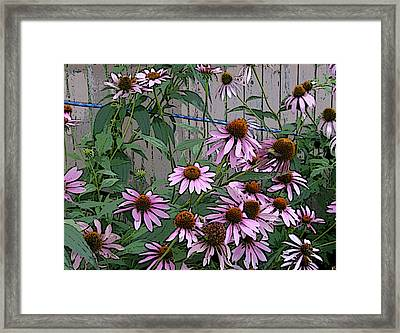 Framed Print featuring the photograph The Coneflowers by Skyler Tipton