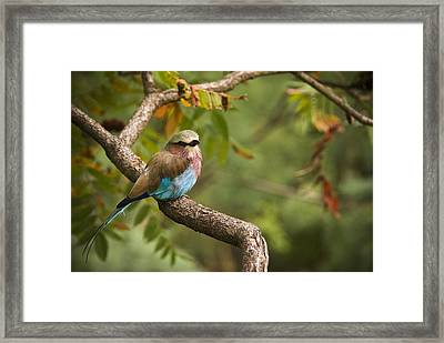 The Conspicuous Roller Framed Print by Chad Davis