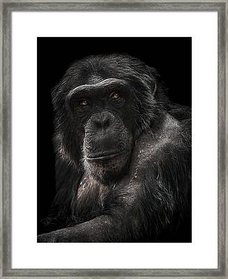 The Contender Framed Print by Paul Neville