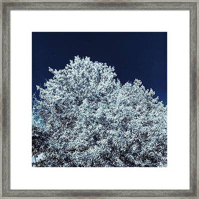 The Contrast Of Yellow And Blue In Bluescale Framed Print