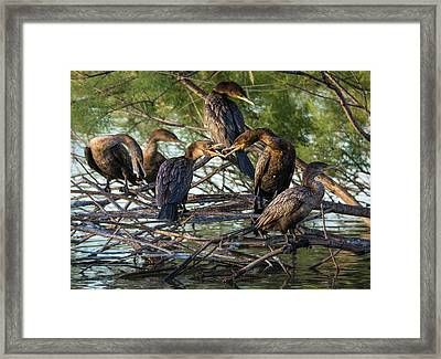 The Conversation Framed Print by Emily Bristor
