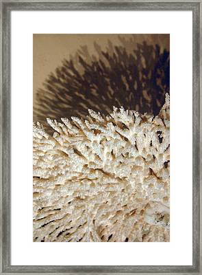 The Coral Framed Print by Jez C Self