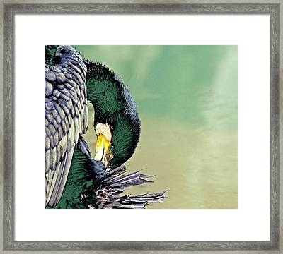 The Cormorant Framed Print