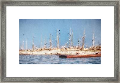 Framed Print featuring the photograph The Cormorants At Deaths Door by Susan Rissi Tregoning