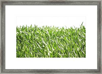 The Corn Field Framed Print