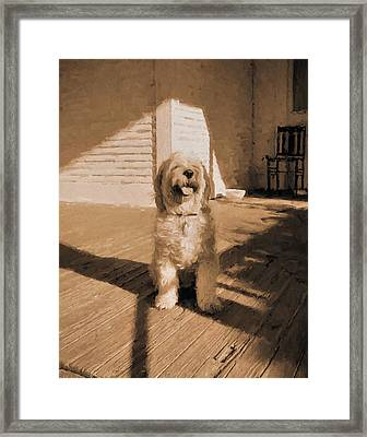 The Country Dog Framed Print by JC Findley