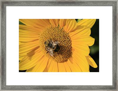 The Courier Framed Print by Alan Rutherford