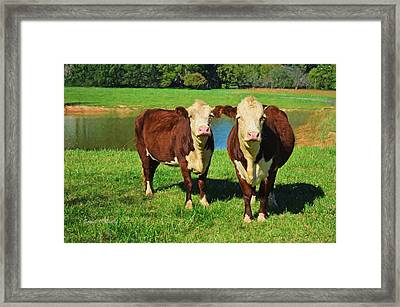 The Cow Girls Framed Print by Sandi OReilly