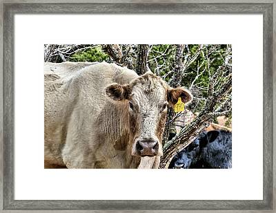 The Cow Framed Print by JC Findley