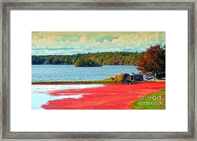 The Cranberry Farm On Cape Cod Framed Print