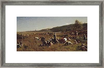 The Cranberry Harvest  Island Of Nantucket Framed Print