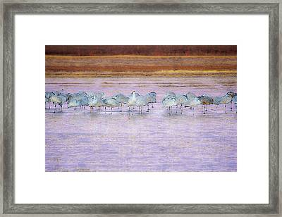 The Cranes Of Bosque Framed Print
