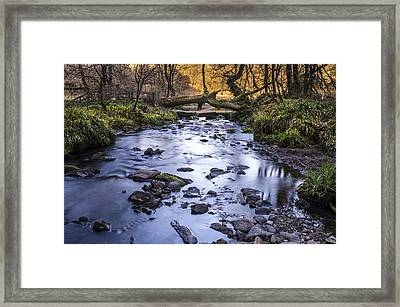 The Creek Framed Print