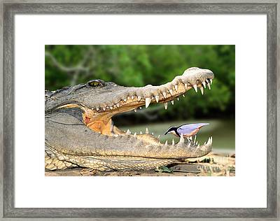 The Crocodile Bird Framed Print