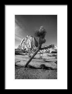 Joshua Tree Np Framed Prints