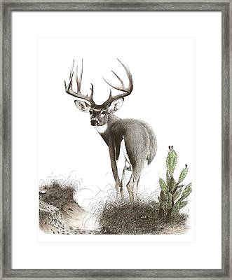 The Crossing Framed Print by Steve Maynard