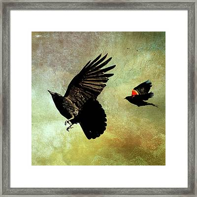 The Crow And The Blackbird Framed Print