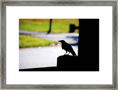Framed Print featuring the photograph The Crow Awaits by Karol Livote