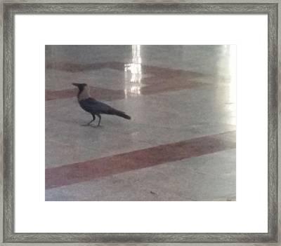 The Crow  Framed Print by Maraimalai K