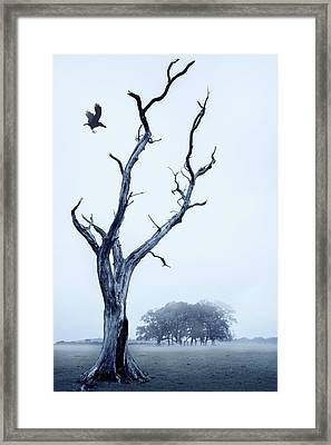The Crow Framed Print by Svetlana Sewell