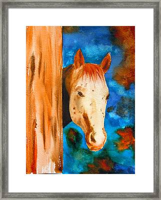 The Curious Appaloosa Framed Print by Sharon Mick