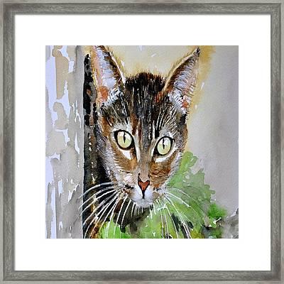 The Curious Tabby Cat Framed Print