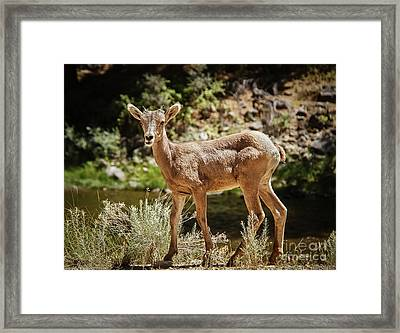 The Cute One Framed Print by Robert Bales