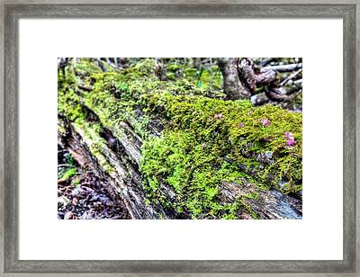 The Cycle Of Life Framed Print