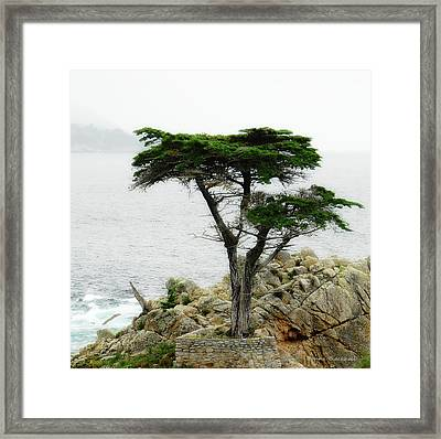 The Cypress Framed Print by Donna Blackhall