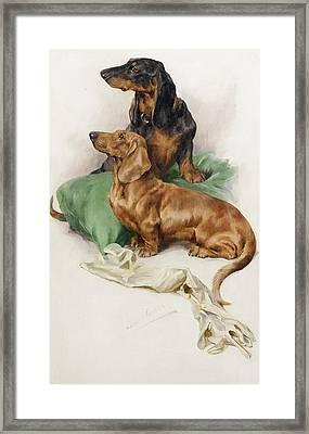 The Dachshunds Framed Print by Arthur Wardle