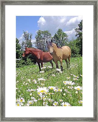 The Daisy Days Of Summer Framed Print