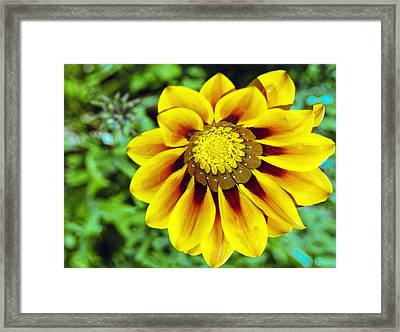 Framed Print featuring the photograph The Daisy by Matthew Bamberg