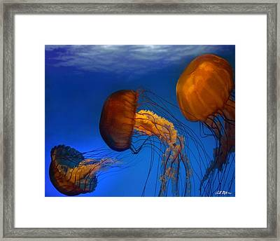 The Dance Framed Print by Bill Stephens