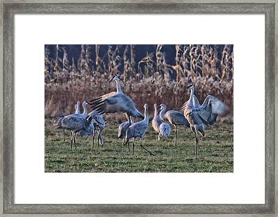 Framed Print featuring the photograph The Dance by Shari Jardina