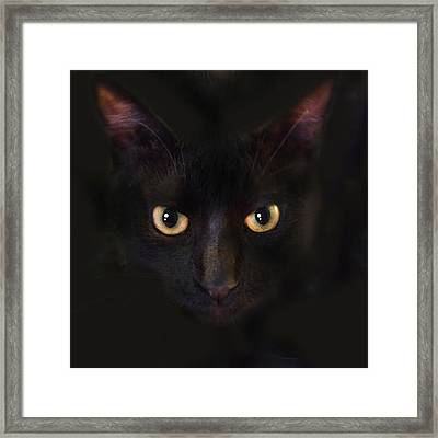 The Dark Cat Framed Print by Gina Dsgn
