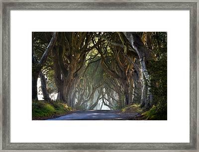 The Dark Hedges Framed Print by Enda McAuley
